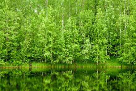CARBON COUNTRY Boreal forests are major contributors of volatile organic carbon, the precursors of water-soluble organic carbon.