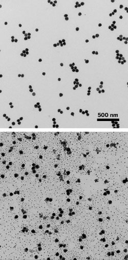 Surface-bound silver nanoparticles (top) give birth to smaller nanoparticles over four weeks (bottom).