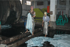 Nearly Done: Tannery workers handle skins that have turned blue from chrome tanning.