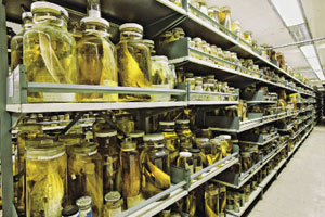 Millions of specimens are kept in alcohol at the Smithsonian's National Museum of Natural History's storage area near Washington, D.C.