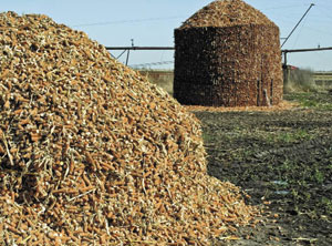 WASTE NOT Ethanol maker Poet wants local corn growers to gather their cobs to use as feedstock for the company's new plant.