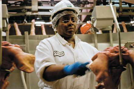 CHECKUP: USDA Food Safety & Inspection Service examiner Rissa Denise Cooper scrutinizes a swine's head.